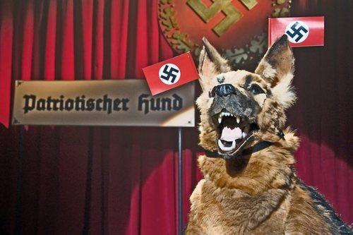I teraz już wiecie czemu owczarek był niemiecki